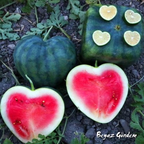 Küp Yıldız ve Kalp Şeklinde Meyveler