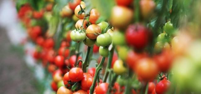 Antalya meyvede rekor rekor kırdı sebze düştü