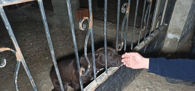 Ankara'da veteriner teknisyeninin bahçesine yapılan baskında yasaklı ırk bulundu