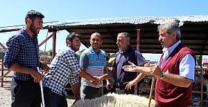 Erzurum Hayvan Pazarında hareketlilik...