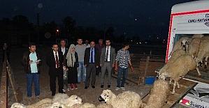 Genç çiftçiler hayvanlarına kavuştu
