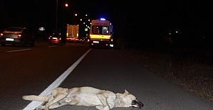Köpeğe çarpan sürücü şarampole...