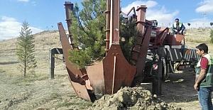 Sungurlu'da Ağaçlar Mesire Alanına Taşınıyor