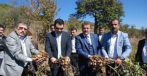 Türkiye'nin ilk 'beyaz patates' hasadı yapıldı