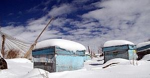 """Evliyaoğlu: """"Kar altında kışlatma, arının ömrünü uzatıyor"""""""