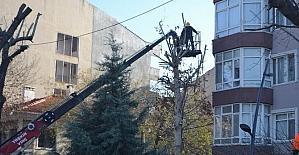 Lüleburgaz'da ağaç budama çalışması