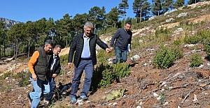 Mersin ormanlarında gençleştirme çalışmaları devam ediyor