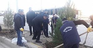 Silvan'ı ağaçlandırma projesi