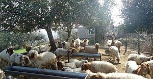 Adana'daki orman köylüsüne 38,3 milyon liralık katkı