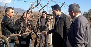 Buharkent'te üzüm üreticilerine eğitim verildi