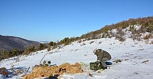 Soğuğa karşı doğaya 1,65 ton yem bırakıldı