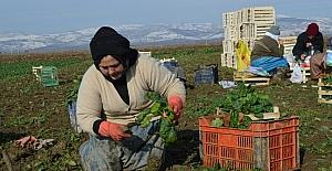 Tarımda Genç Girişimci Kadınlar Güçleniyor Programı Erzincan'da başladı