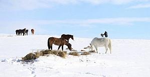 Yılkı atları için doğaya yem bırakıldı