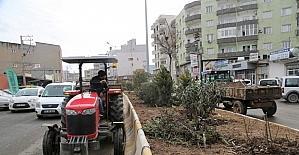 Cizre belediyesi ağaç budama çalışması başlattı