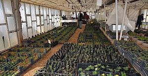 Kilis, Belediye serası ile yeşilleniyor