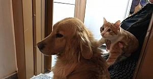 Pascal ve Püskül'ün şaşırtan dostluğu