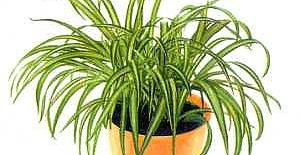 Salonuna Otantik Bir Hava Katmak İsteyenlere; İç Mekan Bitkileri