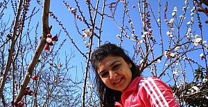 Sarıgöl'de meyve ağaçları çiçek açtı