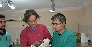 Yavru baykuş barınakta tedavi edildi