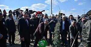 Amasya'da 3 yılda 30 milyon fidan dikildi