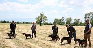 9. Fermalı Av Köpekleri yarışması hafta sonu yapılacak