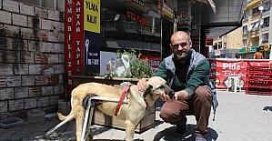 (Özel haber) Duyarlı esnaftan felçli köpeğe yürüteç