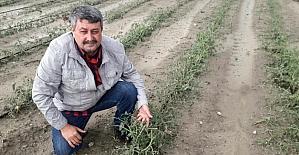 Dolu, üzüm bağlarını ve domates bahçelerini vurdu