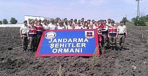 Jandarma şehitler adına hatıra ormanı oluşturuyor