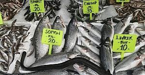 Karadenizde 1 metre uzunluğunda yılan balığı yakalandı