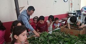 Köy okulunda ipek böceği üretimi
