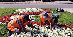 Manavgat'ta 186 bin mevsimlik çiçek