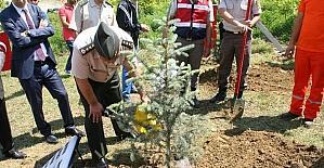 Jandarma Devrek'te ağaç dikti