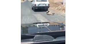 Otomobilin arkasına bağlanıp sürüklenen köpek kurtarıldı