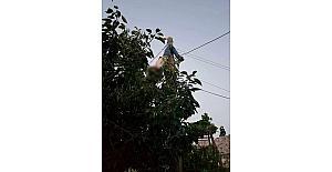 Arızayı gidermek için elektrik direğine tırmandı, canından oldu