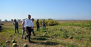 Başkan Özkan dolunun vurduğu ovada incelemelerde bulundu