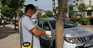 Elazığ'da ağaçlar enjeksiyon yöntemiyle korunuyor