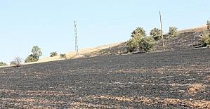 Elazığ'da ot yangını, ağaçlara zarar verdi