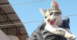 Elektrik direğinden kedi kurtarma operasyonu