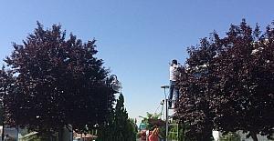 Gölbaşı'nda parklar bakıma alındı