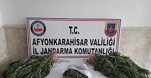 Jandarma tarlasına Hin keneviri eken şahsı gözaltına aldı