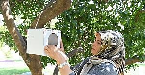 Konyaaltı'nda parklara yararlı böcek