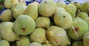 Mut'ta incir 7,5 liradan alıcı buluyor