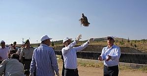 Nevşehir'de bin 500 keklik doğayla buluşturuldu