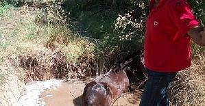Su dolu çukura düşen atı itfaiye ekipleri kurtardı