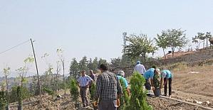 Sungurlu belediyesi 920 fidanı toprakla...