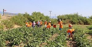 Tarım kampında 4. gurup öğrenciler çapaya başladı