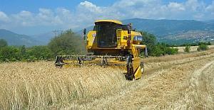 Tosya'da hububat hasadı 13 biçerdöverle rekora gidiyor