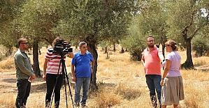 ADÜ'nün zeytinleri medyaya taşınıyor