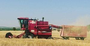 Altıntaş'ta arpa ve buğday hasadı üreticinin yüzünü güldürdü