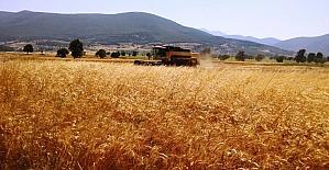 Buğday hasadında dane kaybı düştü, 3,2 milyon lira kazanç sağlandı